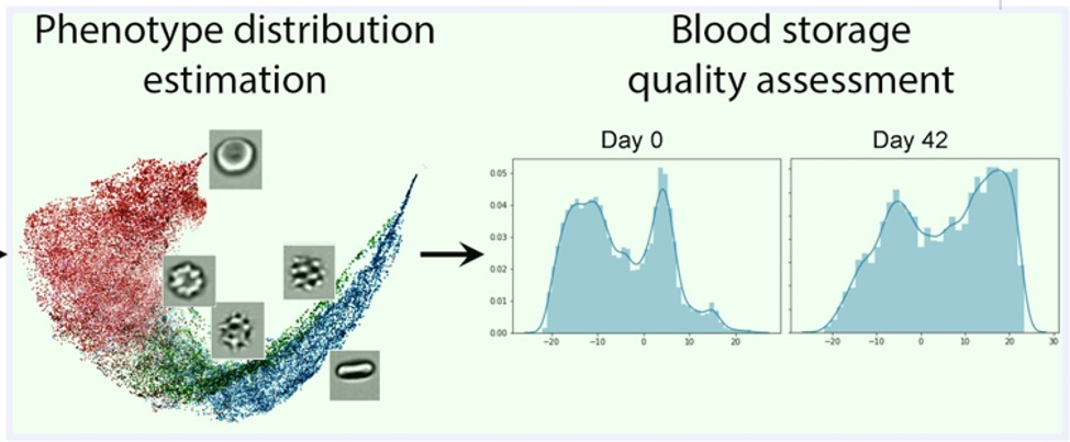 Figure 8. Distribution of phenotypes (morphologies) revealed during CNN visualization.
