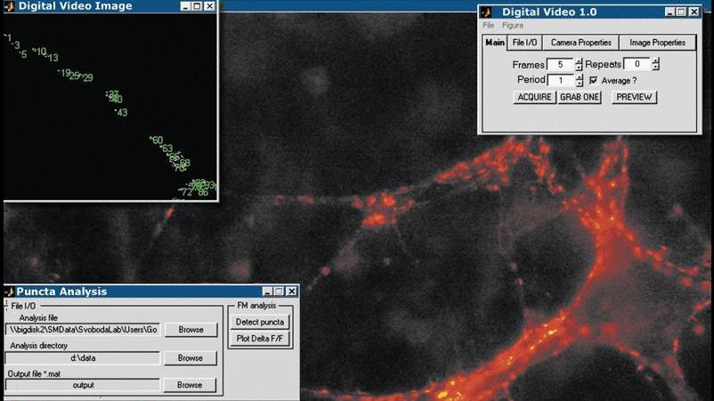 中枢シナプスの画像を収集して解析し、時間経過に伴うシナプス伝達を監視する Image Acquisition Toolbox アプリケーション。