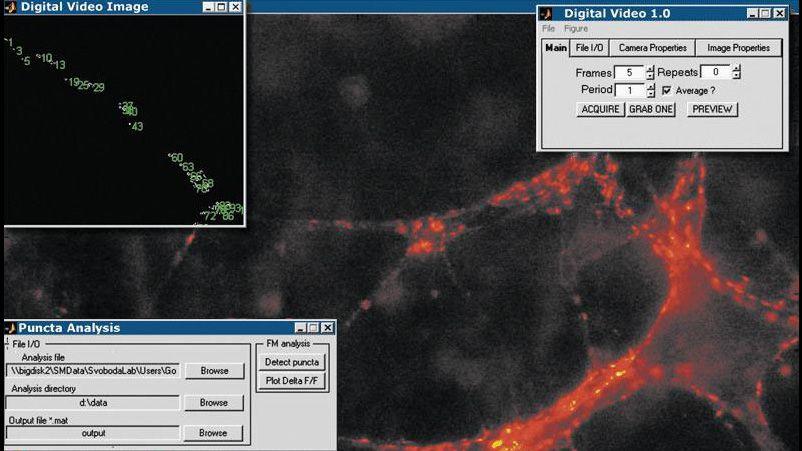 中枢シナプスの画像を取得して解析し、経時的にシナプスの伝達を監視する Image Acquisition Toolbox アプリケーション。