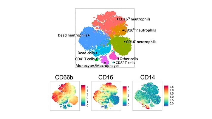 In-host Mathematical Modelling of COVID-19 in Humans