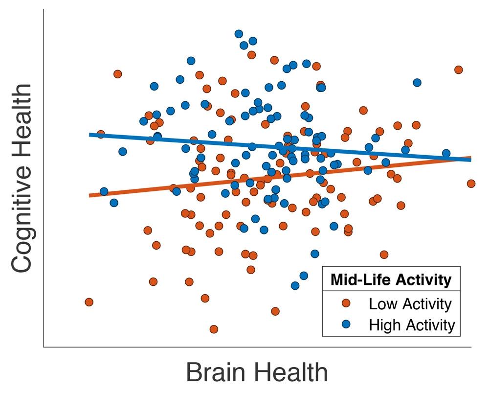 65 歳以上の Cam-CAN 参加者の一部における、認知能力と脳の健康の構造的 MRI 画像の測定値 (「全灰白質体積」) との関係を示すプロット (Chan 他、2018年)。各参加者はドットで表されています。ドットの色は、中年期に職場外での活動レベルが高いこと (青)、または低いこと (赤) を示しています。