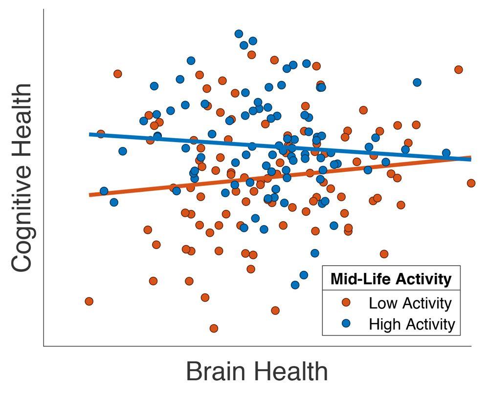 高齢患者が中年期の社会活動が多いと報告した場合に、脳の健康状態が改善されたことを示すグラフ